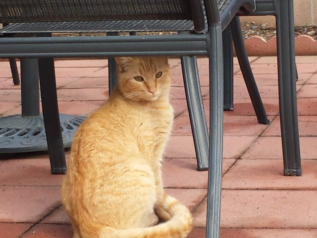 Update on wiley: our back yard stray cat!