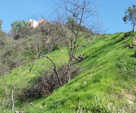 2811 Benedict Canyon Dr, Beverly Hills, CA 90210 JUST LISTED! Vacant Land $895,000.00!